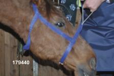 Sostegno per la testa di equini per radiografia