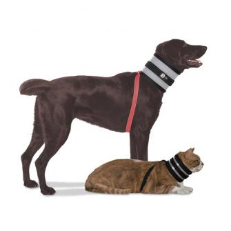 Collari per cani e gatti BIT NOT