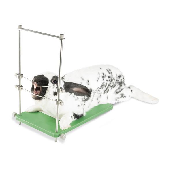 Tavolo con apribocca per roditori/conigli e modello dentale roditori